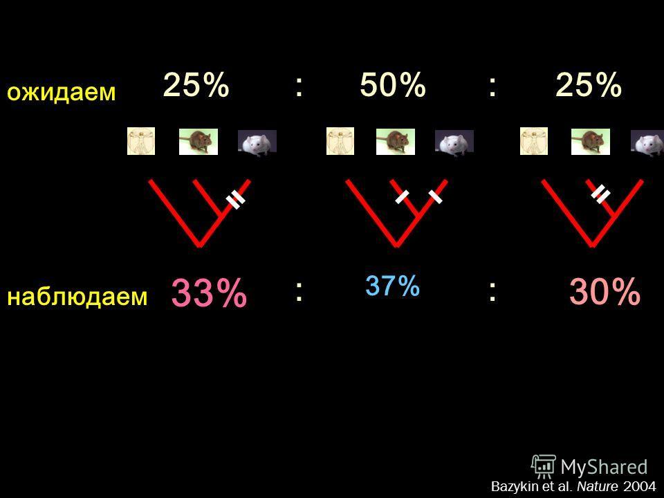 25%50%:25%: Bazykin et al. Nature 2004 ожидаем 33% 37% : 30% : наблюдаем