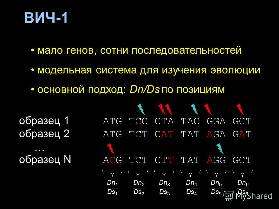 ВИЧ-1 мало генов, сотни последовательностей модельная система для изучения эволюции основной подход: Dn/Ds по позициям образец 1 ATG TCC CTA TAC GGA GCT образец 2 ATG TCT CAT TAT AGA GAT … образец N ACG TCT CTT TAT AGG GCT Dn 1 Ds 1 Dn 2 Ds 2 Dn 3 Ds