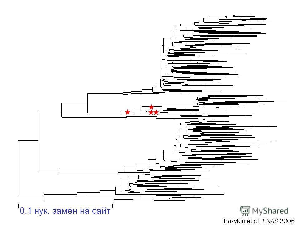 AACATCATC AAAAAC GGGGCC 0.1 нук. замен на сайт Bazykin et al. PNAS 2006
