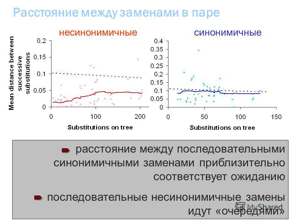 Расстояние между заменами в паре расстояние между последовательными синонимичными заменами приблизительно соответствует ожиданию последовательные несинонимичные замены идут «очередями» несинонимичныесинонимичные