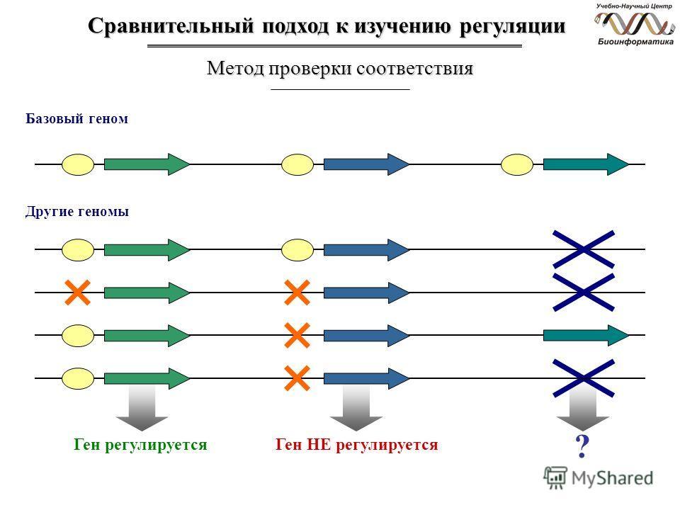 Другие геномы Ген регулируетсяГен НЕ регулируется ? Базовый геном Сравнительный подход к изучению регуляции Метод проверки соответствия