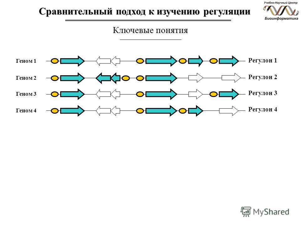 Сравнительный подход к изучению регуляции Ключевые понятия Геном 1 Регулон 1 Геном 2 Геном 3 Геном 4 Регулон 2 Регулон 3 Регулон 4
