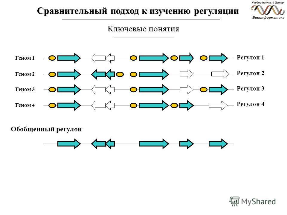 Сравнительный подход к изучению регуляции Ключевые понятия Геном 1 Регулон 1 Геном 2 Геном 3 Геном 4 Регулон 2 Регулон 3 Регулон 4 Обобщенный регулон