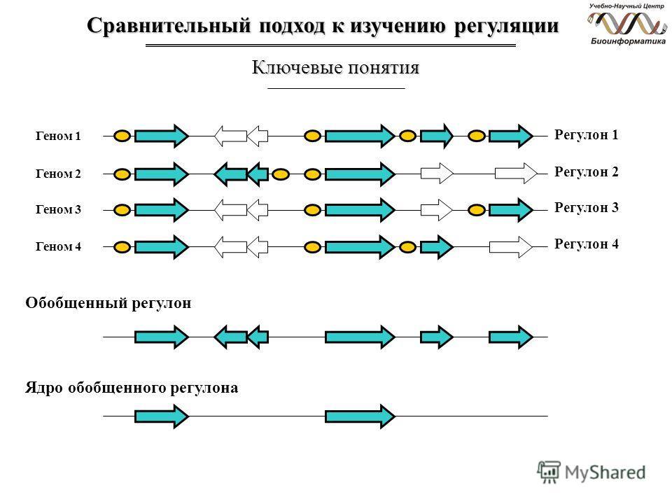 Сравнительный подход к изучению регуляции Ключевые понятия Геном 1 Регулон 1 Геном 2 Геном 3 Геном 4 Регулон 2 Регулон 3 Регулон 4 Обобщенный регулон Ядро обобщенного регулона