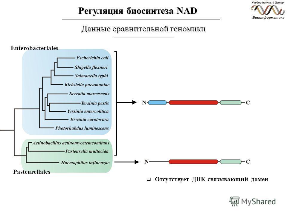 Регуляция биосинтеза NAD Данные сравнительной геномики Отсутствует ДНК-связывающий домен Enterobacteriales Pasteurellales