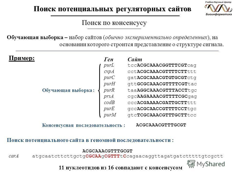 Обучающая выборка – набор сайтов (обычно экспериментально определенных), на основании которого строится представление о структуре сигнала. purL tccACGCAAACGGTTTCGTcag cvpA cctACGCAAACGTTTTCTTttt purC gatACGCAAACGTGTGCGTctg purH gttGCGCAAACGTTTTCGTtac