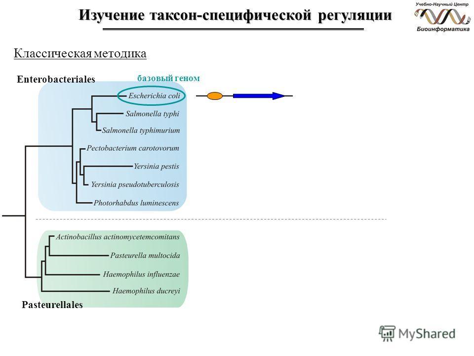Изучение таксон-специфической регуляции Enterobacteriales базовый геном Pasteurellales Классическая методика