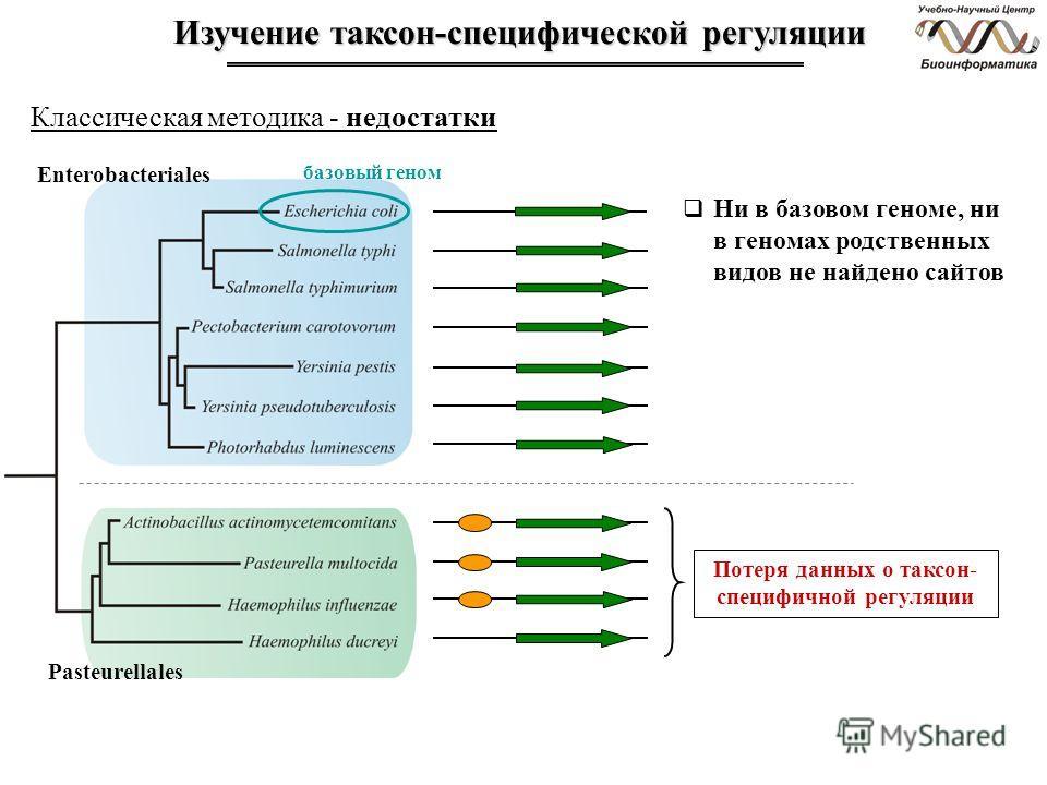 Изучение таксон-специфической регуляции Классическая методика - недостатки Enterobacteriales базовый геном Pasteurellales Ни в базовом геноме, ни в геномах родственных видов не найдено сайтов Потеря данных о таксон- специфичной регуляции
