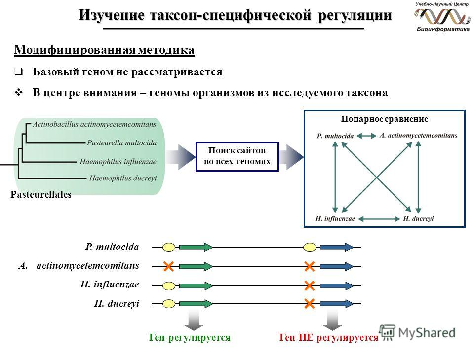 Изучение таксон-специфической регуляции Модифицированная методика Базовый геном не рассматривается В центре внимания – геномы организмов из исследуемого таксона Pasteurellales Поиск сайтов во всех геномах Попарное сравнение Ген регулируетсяГен НЕ рег