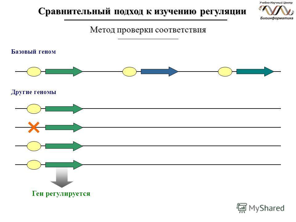 Сравнительный подход к изучению регуляции Метод проверки соответствия Другие геномы Ген регулируется Базовый геном