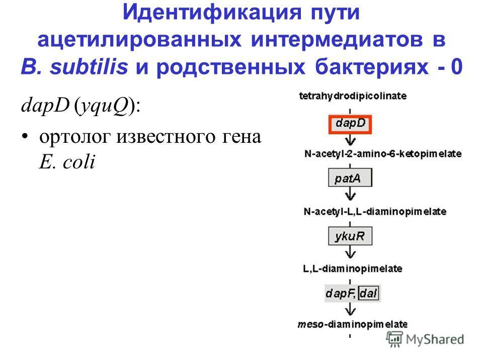 Идентификация пути ацетилированных интермедиатов в B. subtilis и родственных бактериях - 0 dapD (yquQ): ортолог известного гена E. coli