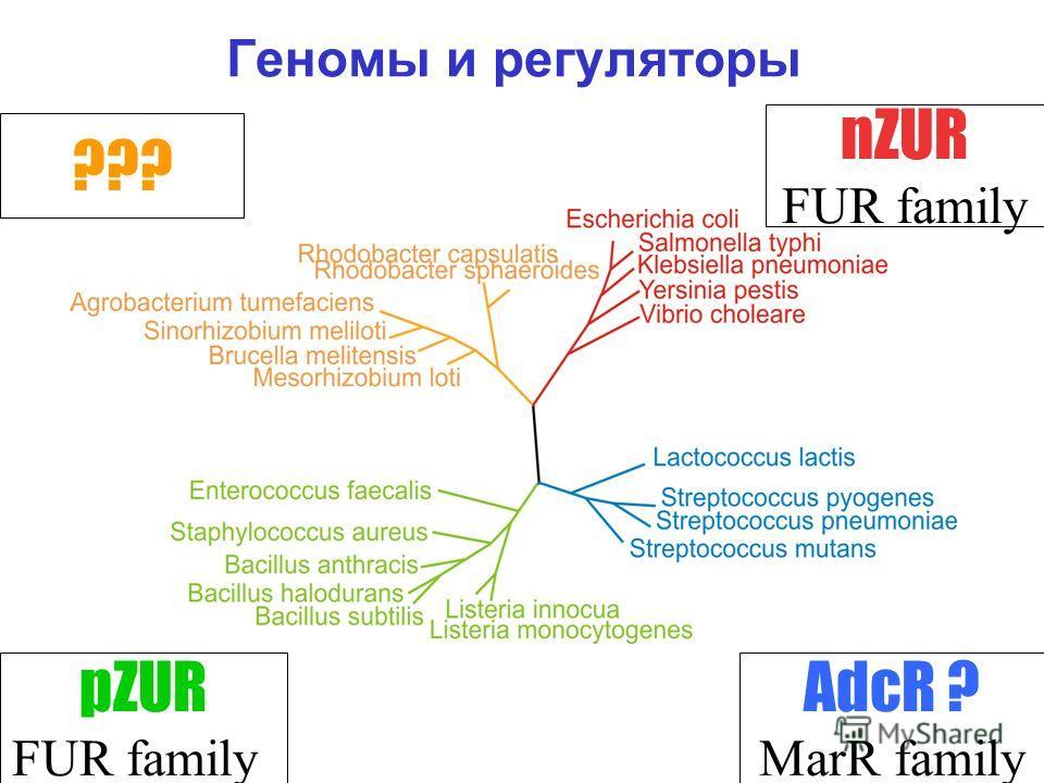 Геномы и регуляторы nZUR FUR family ??? AdcR ? MarR family pZUR FUR family