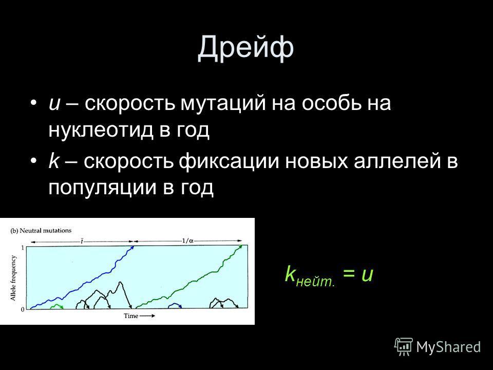 Дрейф u – скорость мутаций на особь на нуклеотид в год k – скорость фиксации новых аллелей в популяции в год k нейт. = u