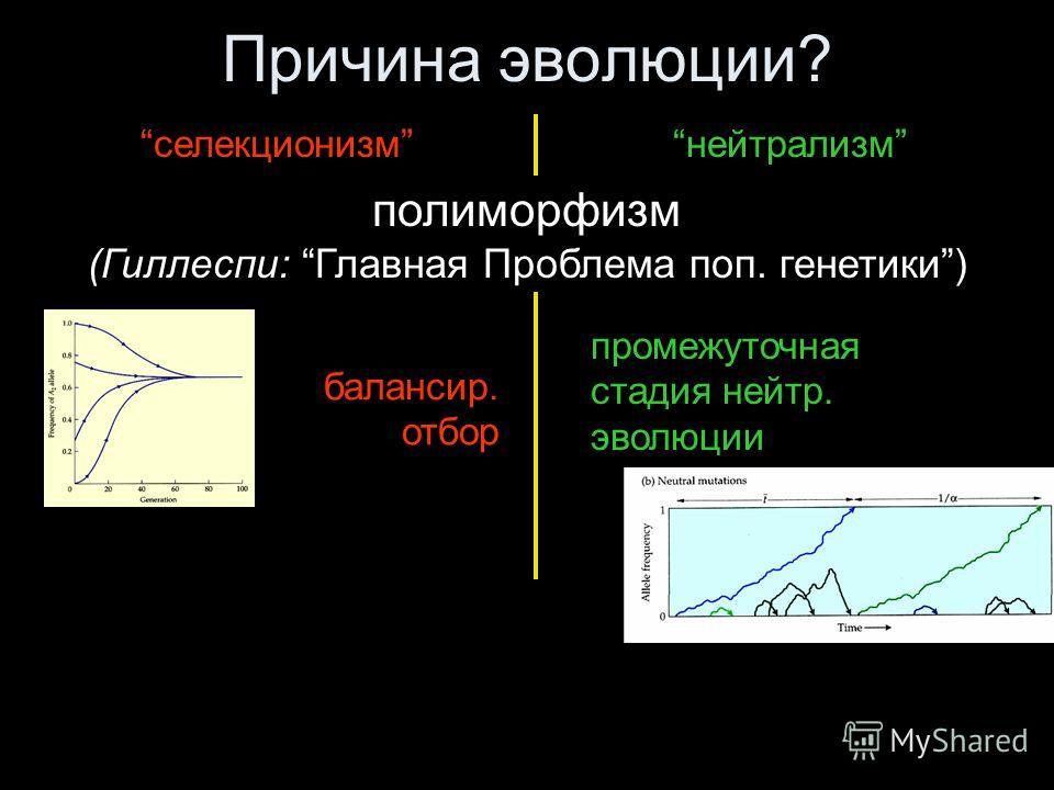 Причина эволюции? селекционизмнейтрализм полиморфизм (Гиллеспи: Главная Проблема поп. генетики) балансир. отбор промежуточная стадия нейтр. эволюции