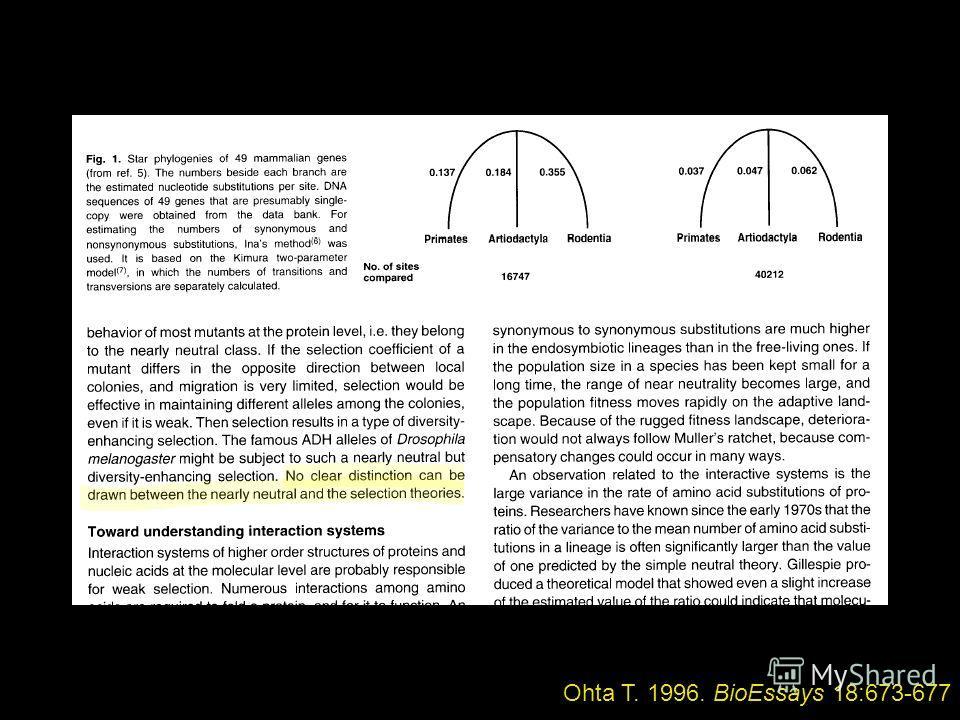 Ohta T. 1996. BioEssays 18:673-677