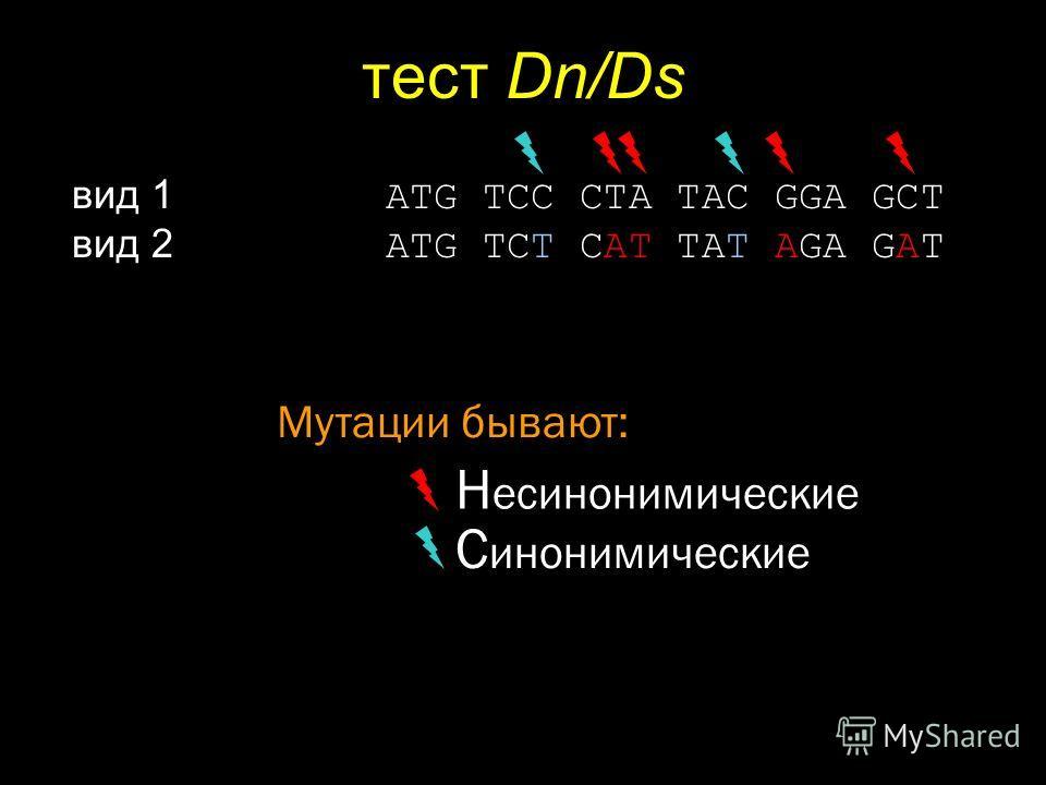 тест Dn/Ds вид 1 ATG TCC CTA TAC GGA GCT вид 2 ATG TCT CAT TAT AGA GAT Н есинонимические Мутации бывают: С инонимические