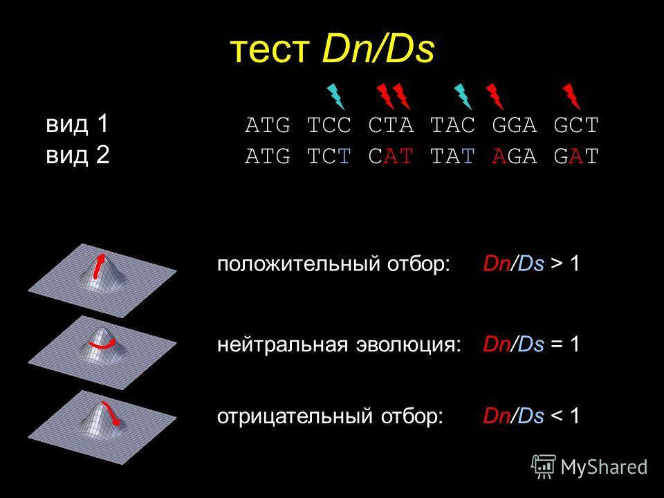 тест Dn/Ds положительный отбор: Dn/Ds > 1 нейтральная эволюция: Dn/Ds = 1 отрицательный отбор: Dn/Ds < 1 вид 1 ATG TCC CTA TAC GGA GCT вид 2 ATG TCT CAT TAT AGA GAT