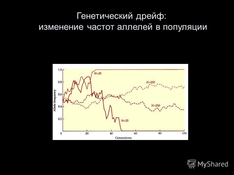 Генетический дрейф: изменение частот аллелей в популяции