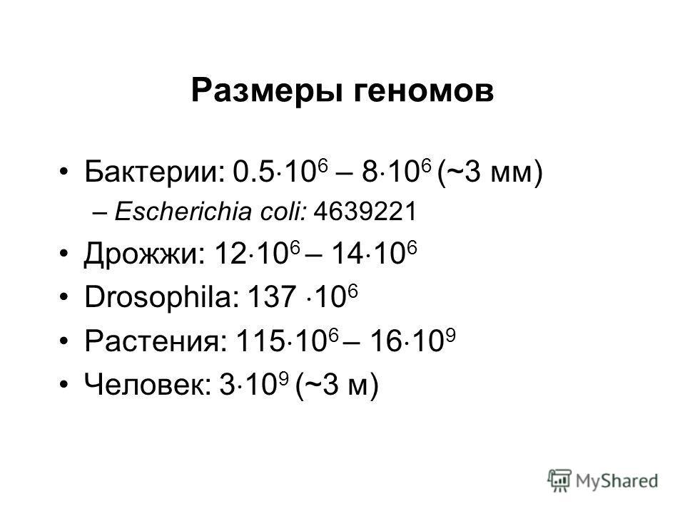 Размеры геномов Бактерии: 0.5 10 6 – 8 10 6 (~3 мм) –Escherichia coli: 4639221 Дрожжи: 12 10 6 – 14 10 6 Drosophila: 137 10 6 Растения: 115 10 6 – 16 10 9 Человек: 3 10 9 (~3 м)
