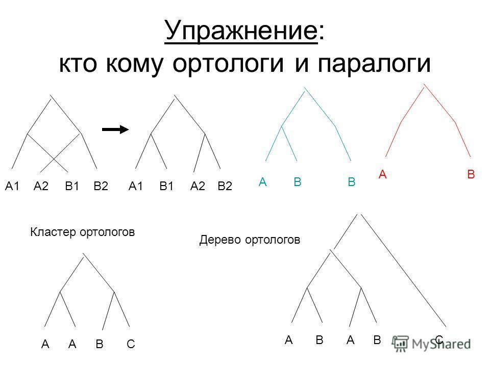 Упражнение: кто кому ортологи и паралоги A1A1A2A2B1B1B2B2 AAB ABB C AABBC AB A1A1A2A2B1B1B2B2 Кластер ортологов Дерево ортологов