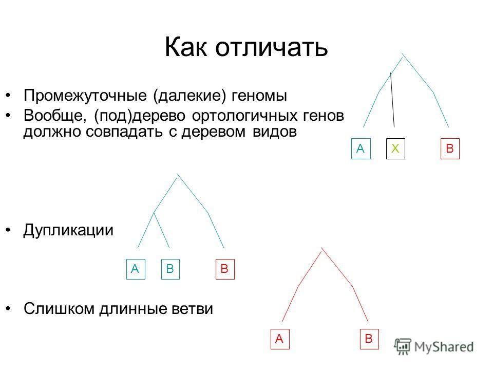 Как отличать Промежуточные (далекие) геномы Вообще, (под)дерево ортологичных генов должно совпадать с деревом видов Дупликации Слишком длинные ветви ABХ ABB AB