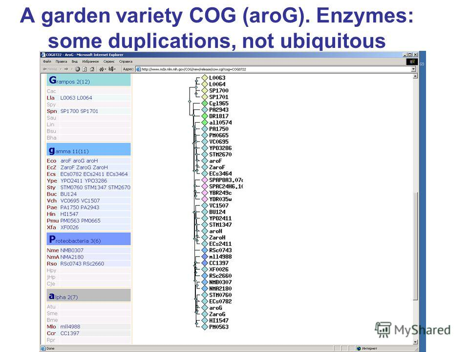 A garden variety COG (aroG). Enzymes: some duplications, not ubiquitous