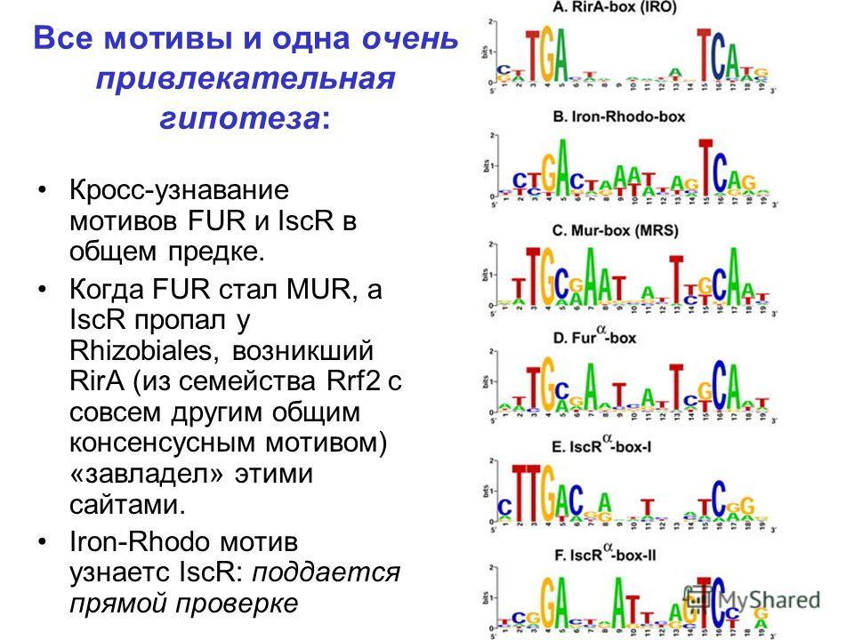 Все мотивы и одна очень привлекательная гипотеза: Кросс-узнавание мотивов FUR и IscR в общем предке. Когда FUR стал MUR, а IscR пропал у Rhizobiales, возникший RirA (из семейства Rrf2 с совсем другим общим консенсусным мотивом) «завладел» этими сайта