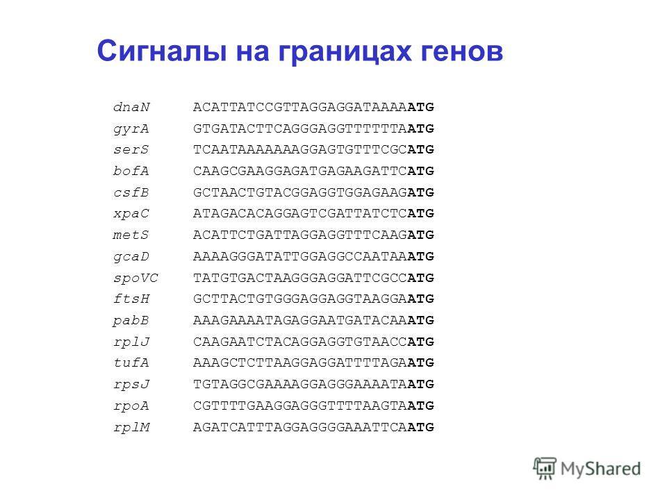 Сигналы на границах генов dnaN ACATTATCCGTTAGGAGGATAAAAATG gyrA GTGATACTTCAGGGAGGTTTTTTAATG serS TCAATAAAAAAAGGAGTGTTTCGCATG bofA CAAGCGAAGGAGATGAGAAGATTCATG csfB GCTAACTGTACGGAGGTGGAGAAGATG xpaC ATAGACACAGGAGTCGATTATCTCATG metS ACATTCTGATTAGGAGGTTTC