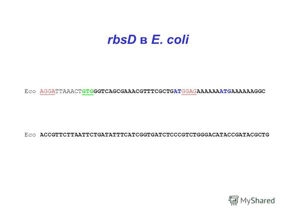 rbsD в E. coli Eco AGGATTAAACTGTGGGTCAGCGAAACGTTTCGCTGATGGAGAAAAAAATGAAAAAAGGC Eco ACCGTTCTTAATTCTGATATTTCATCGGTGATCTCCCGTCTGGGACATACCGATACGCTG