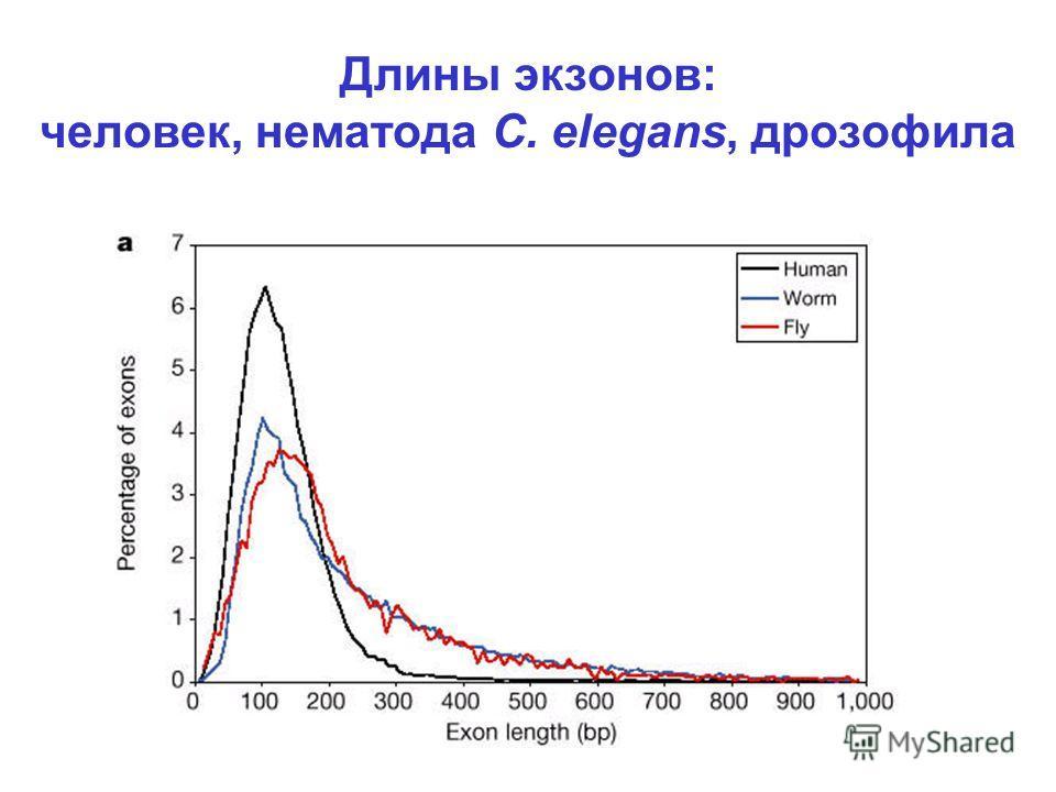 Длины экзонов: человек, нематода C. elegans, дрозофила