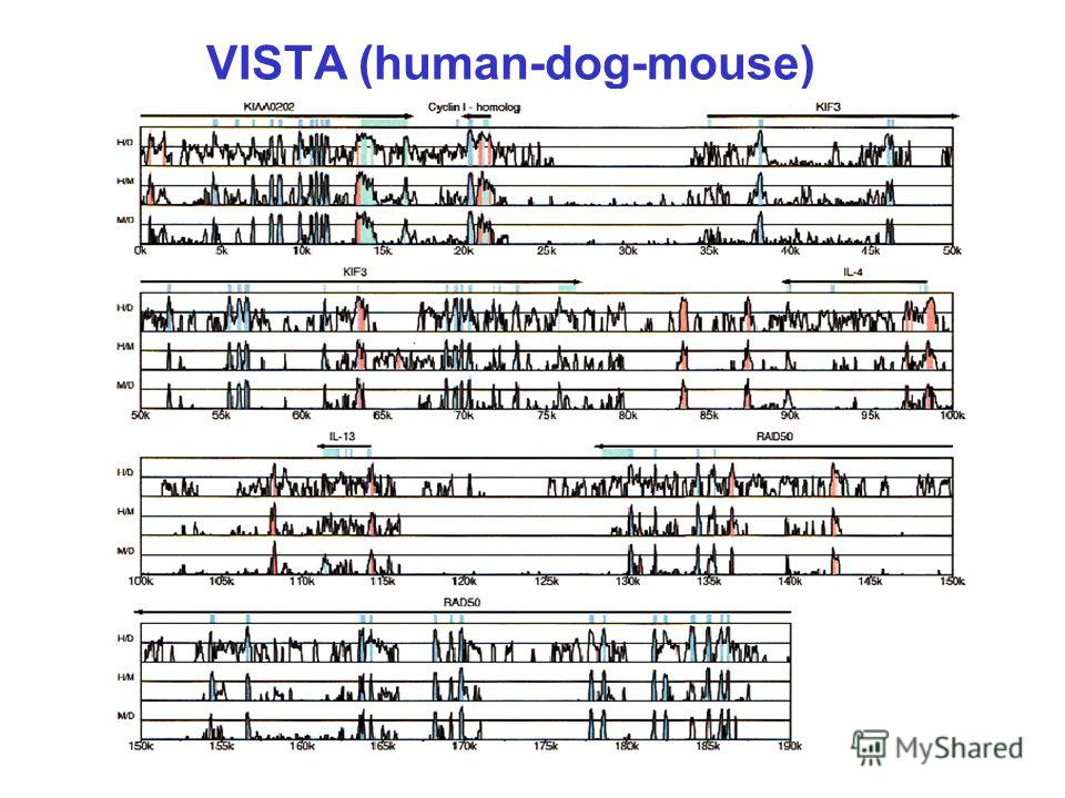 VISTA (human-dog-mouse)