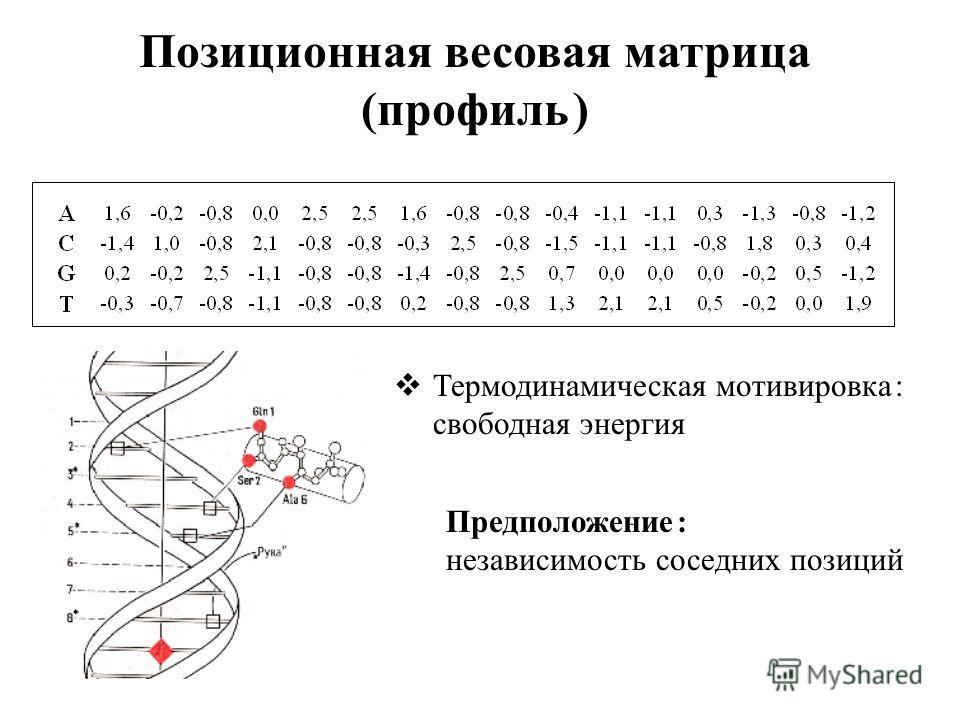 Позиционная весовая матрица (профиль ) Термодинамическая мотивировка : свободная энергия Предположение : независимость соседних позиций