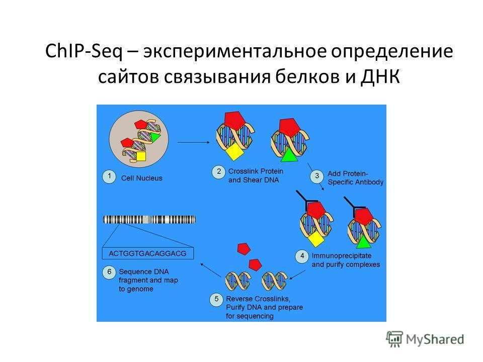 ChIP-Seq – экспериментальное определение сайтов связывания белков и ДНК