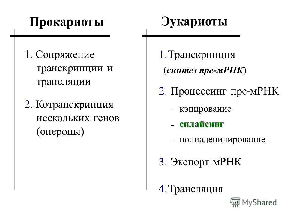 Эукариоты Прокариоты 1. Сопряжение транскрипции и трансляции 2. Котранскрипция нескольких генов (опероны) 1.Транскрипция 2. Процессинг пре-мРНК 3. Экспорт мРНК 4.Трансляция (синтез пре-мРНК) – кэпирование сплайсинг – сплайсинг – полиаденилирование