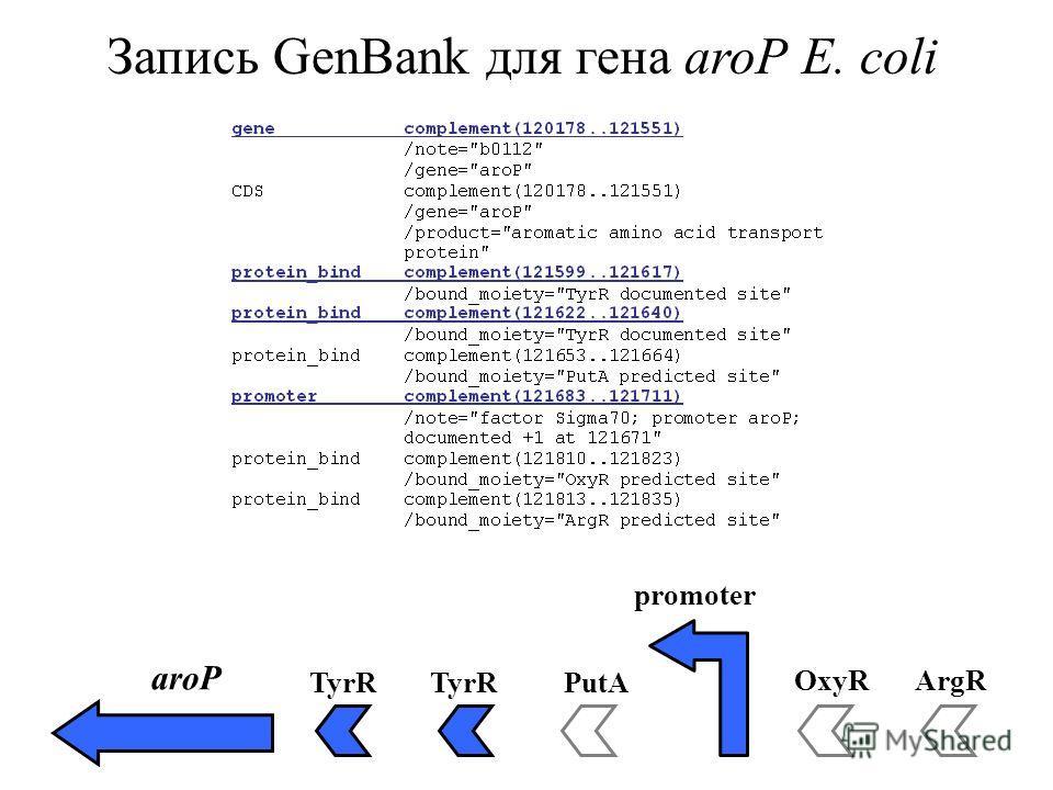 Запись GenBank для гена aroP E. coli aroP TyrR PutA OxyRArgR promoter