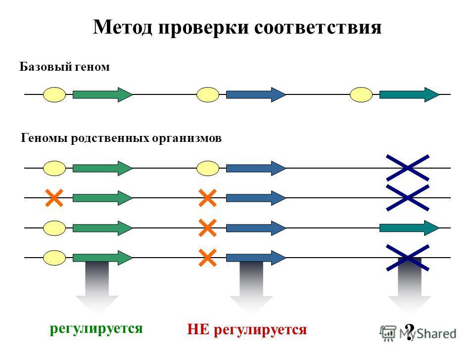 регулируется НЕ регулируется ? Базовый геном Метод проверки соответствия Геномы родственных организмов