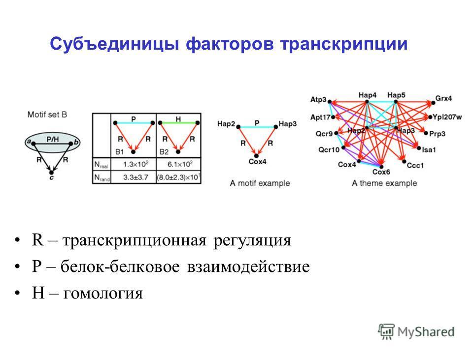 Субъединицы факторов транскрипции R – транскрипционная регуляция Р – белок-белковое взаимодействие Н – гомология