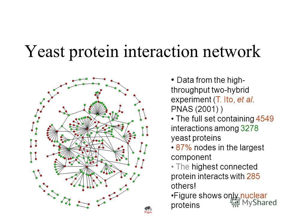 Yeast protein interaction network Data from the high- throughput two-hybrid experiment (T. Ito, et al. PNAS (2001) ) The full set containing 4549 interactions among 3278 yeast proteins 87% nodes in the largest component The highest connected protein