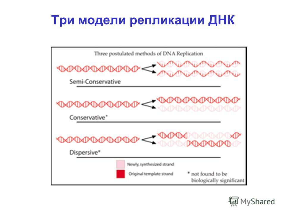 Три модели репликации ДНК