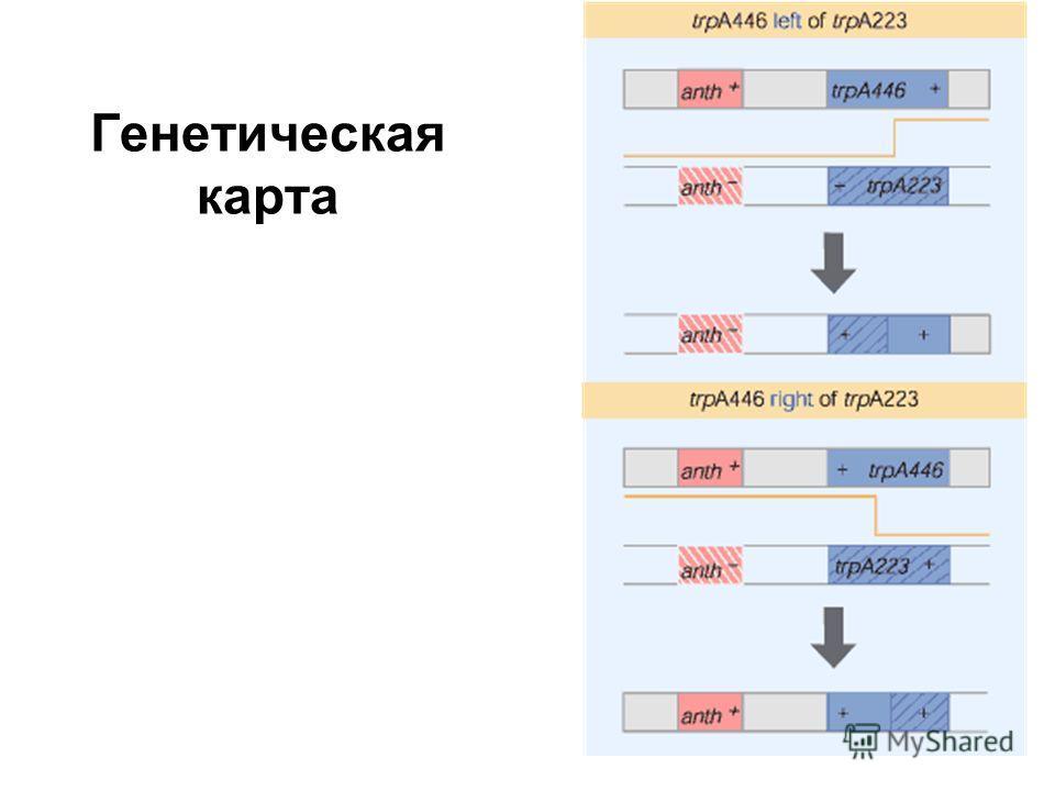 Генетическая карта