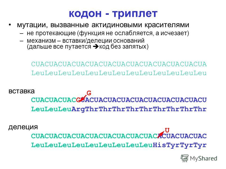 кодон - триплет мутации, вызванные актидиновыми красителями –не протекающие (функция не ослабляется, а исчезает) –механизм – вставки/делеции оснований (дальше все путается код без запятых) CUACUACUACUACUACUACUACUACUACUACUACUACUA LeuLeuLeuLeuLeuLeuLeu
