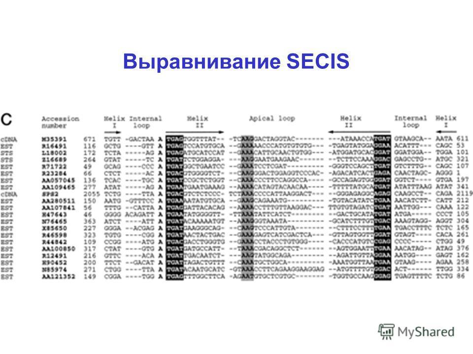 Выравнивание SECIS
