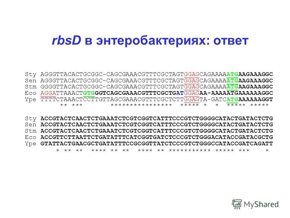 rbsD в энтеробактериях: ответ Sty AGGGTTACACTGCGGC-CAGCGAAACGTTTCGCTAGTGGAGCAGAAAAATGAAGAAAGGC Sen AGGGTTACACTGCGGC-CAGCGAAACGTTTCGCTAGTGGAGCAGAAAAATGAAGAAAGGC Stm GGGGTTACACTGCGGC-CAGCGAAACGTTTCGCTAGTGGAGCAGAAAAATGAAGAAAGGC Eco AGGATTAAACTGTGGGTCAGC