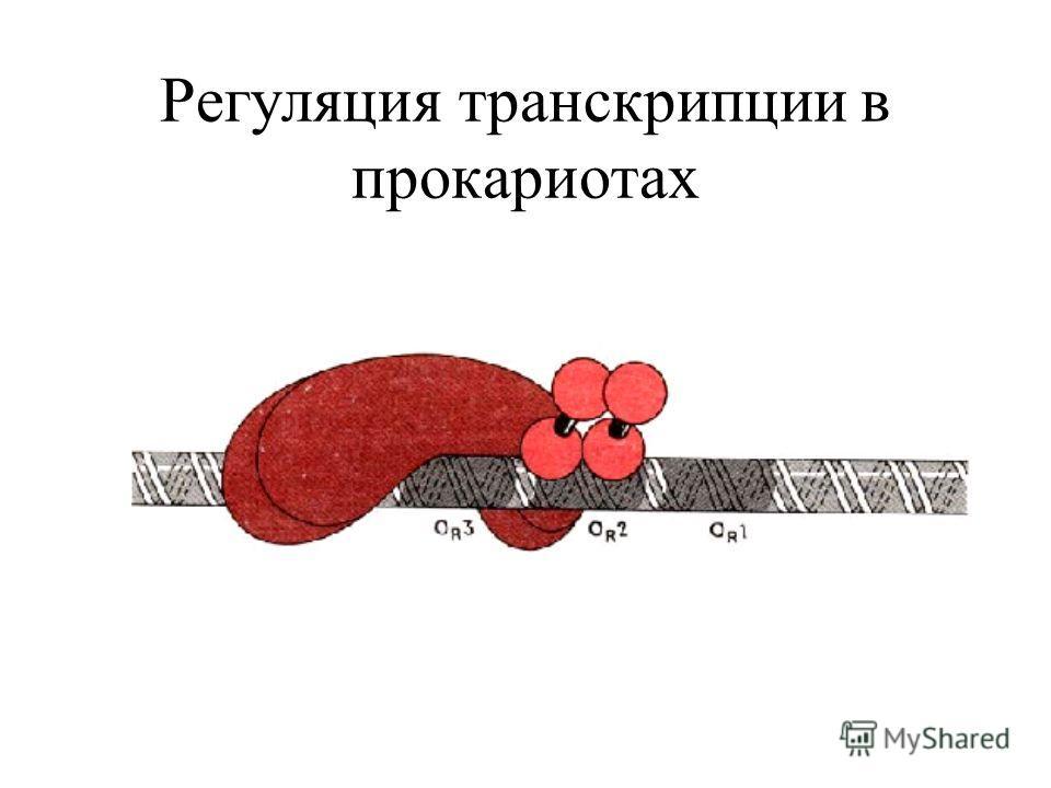 Регуляция транскрипции в прокариотах