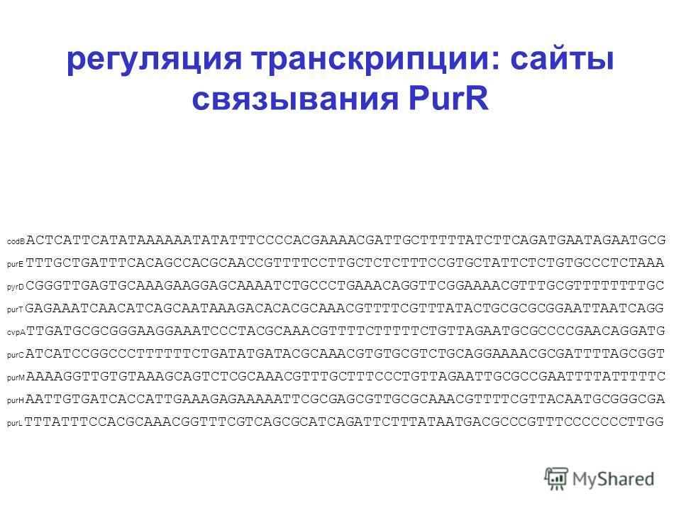 регуляция транскрипции: сайты связывания PurR codB ACTCATTCATATAAAAAATATATTTCCCCACGAAAACGATTGCTTTTTATCTTCAGATGAATAGAATGCG purE TTTGCTGATTTCACAGCCACGCAACCGTTTTCCTTGCTCTCTTTCCGTGCTATTCTCTGTGCCCTCTAAA pyrD CGGGTTGAGTGCAAAGAAGGAGCAAAATCTGCCCTGAAACAGGTTCG