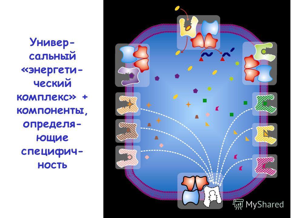 Универ- сальный «энергети- ческий комплекс» + компоненты, определя- ющие специфич- ность