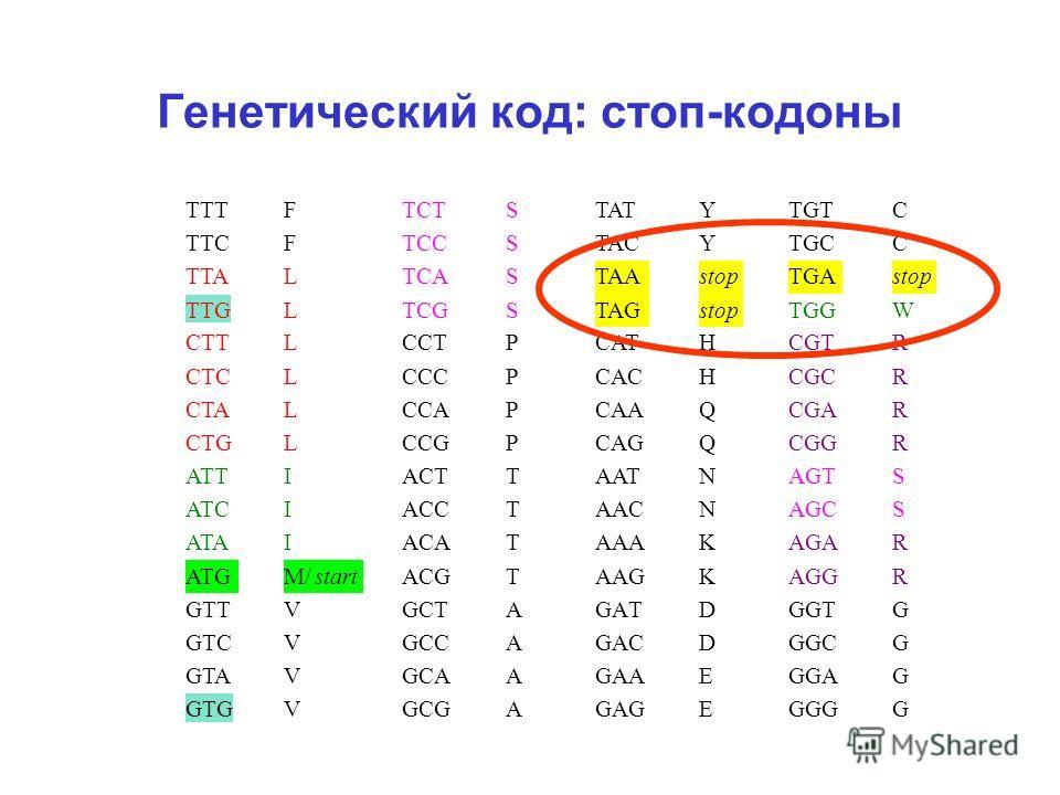 Генетический код: стоп-кодоны