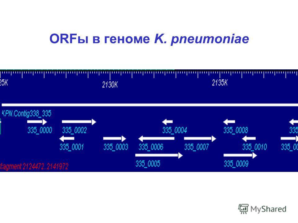 ORFы в геноме K. pneumoniae