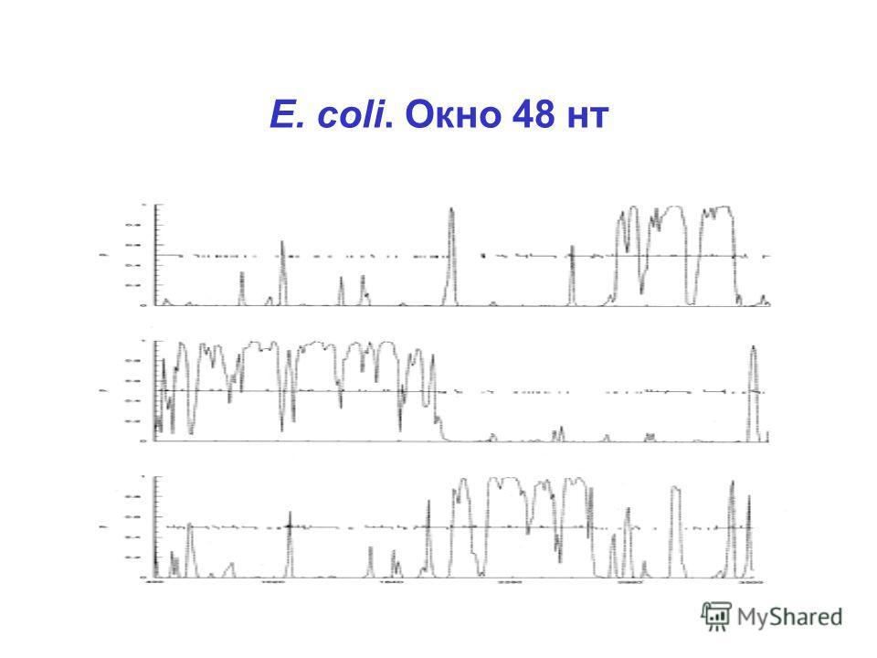 E. coli. Окно 48 нт