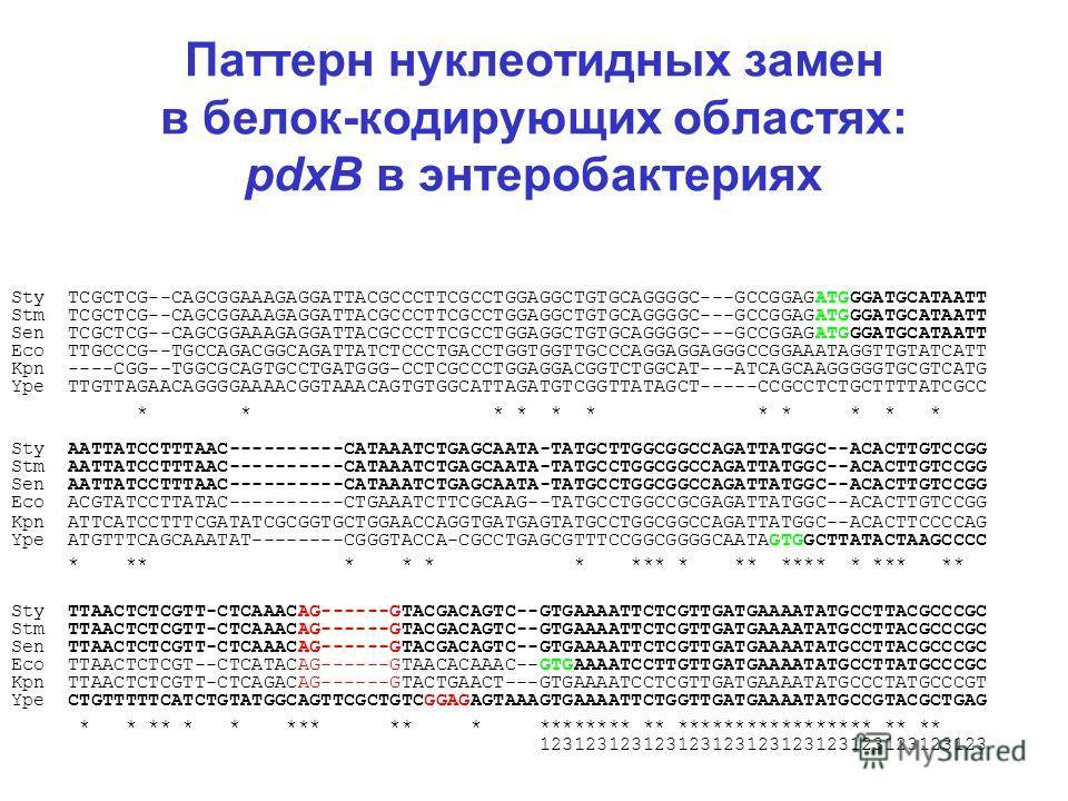 Паттерн нуклеотидных замен в белок-кодирующих областях: pdxB в энтеробактериях Sty TCGCTCG--CAGCGGAAAGAGGATTACGCCCTTCGCCTGGAGGCTGTGCAGGGGC---GCCGGAGATGGGATGCATAATT Stm TCGCTCG--CAGCGGAAAGAGGATTACGCCCTTCGCCTGGAGGCTGTGCAGGGGC---GCCGGAGATGGGATGCATAATT S